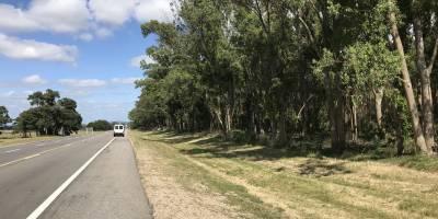 Campo Forestal a minutos de Punta del Este