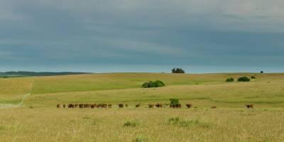 Muy buen campo Agrícola Ganadero a 28 Kms. de San carlos