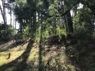 Terreno en venta Zona Cantegril