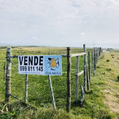 Campo de 24 has con 8156 m2 camino a pueblo garzon y cerca de Jose Ignacio
