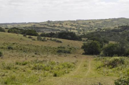 75 hectáreas ubicadas en un entorno muy lindo en Garzon. Consulte!!!!!