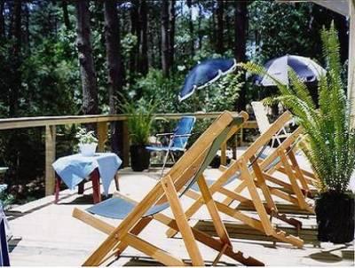 Tranquilidad Descanso Playa Bosque Pura Naturaleza.